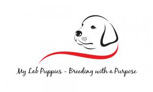 Logo of past website design customer.