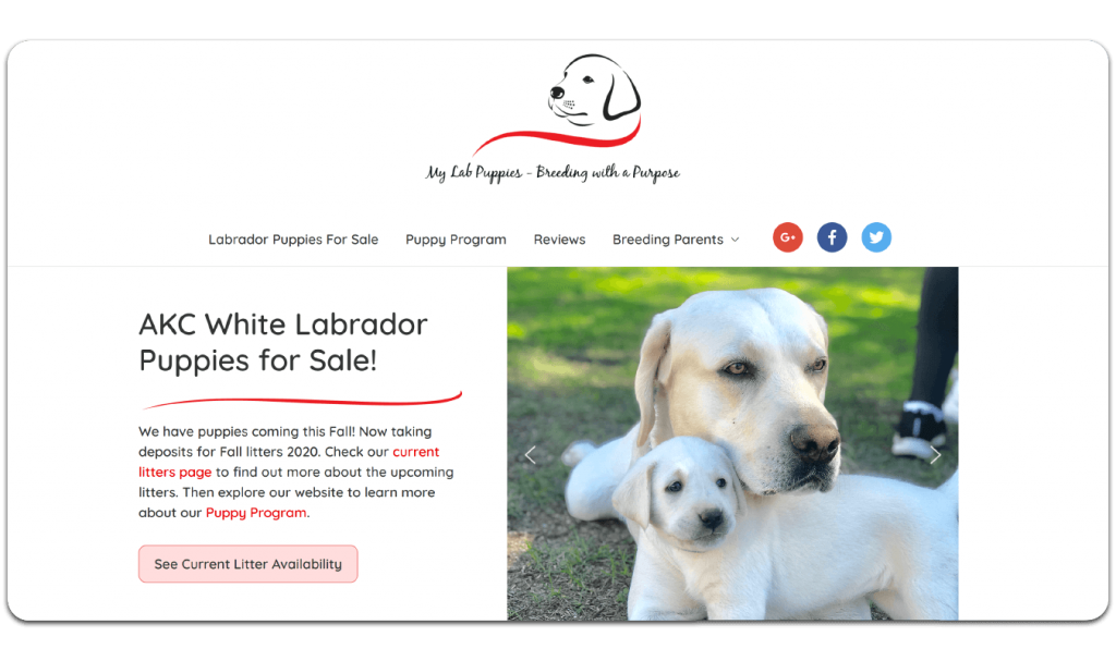 Snapshot of the new WordPress Web Design for My Lab Puppies in Gilbert AZ